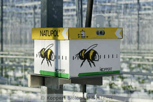 NATUPOL EXCEL