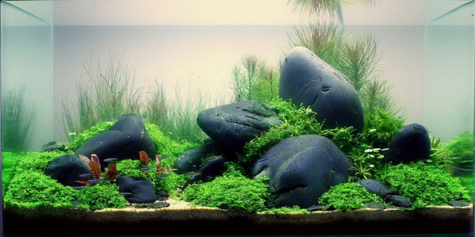 aquascape-designs-970x484